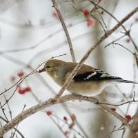 Как помочь птицам зимой? Правильная подкормка птиц зимой.