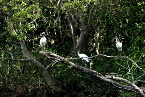 Заповедник птиц в Индии. Моё путешествие.
