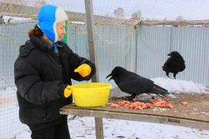"""Как содержатся птицы в реабилитационном центре """"Птицы без границ"""""""