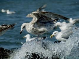 Один день приюта Ассоциации любителей птиц