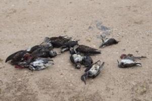 Массовая гибель птиц в России в 2012 году
