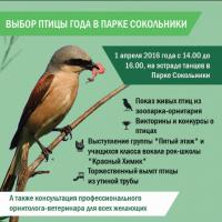 1 апреля 2016 года. Выбор птицы года в парке Сокольники