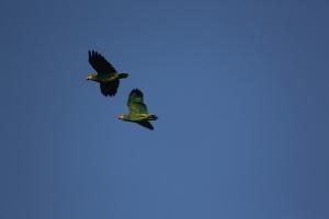 Тропические птицы в дебрях джунглей Амазонии
