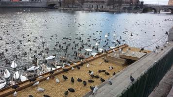 Как ухаживают за птицами в Стокгольме.